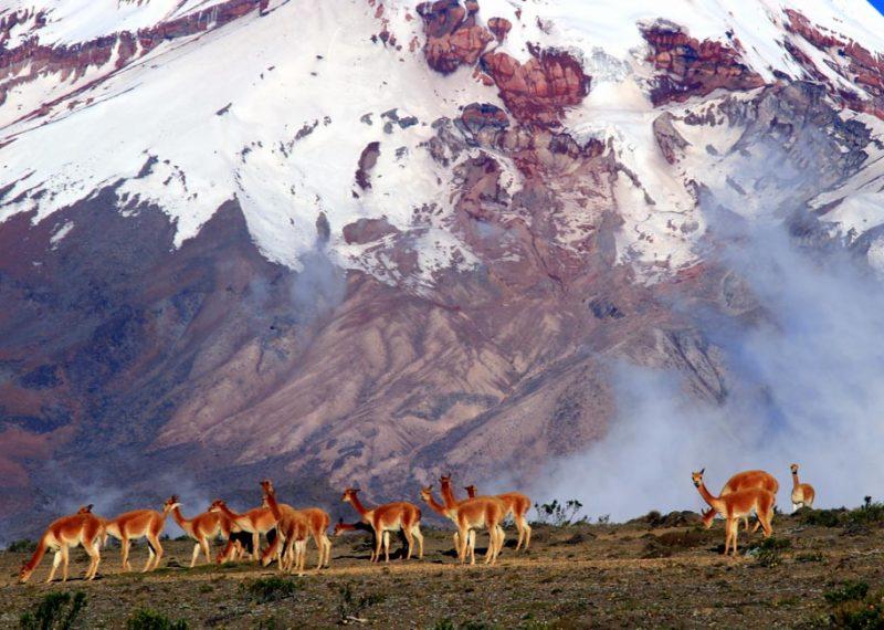 חיות של אקוודור