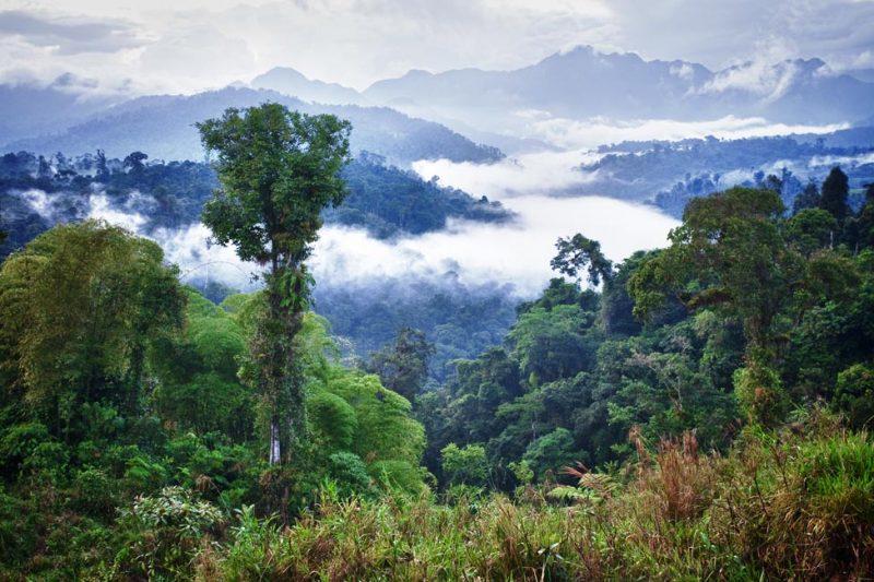 יערות העננים